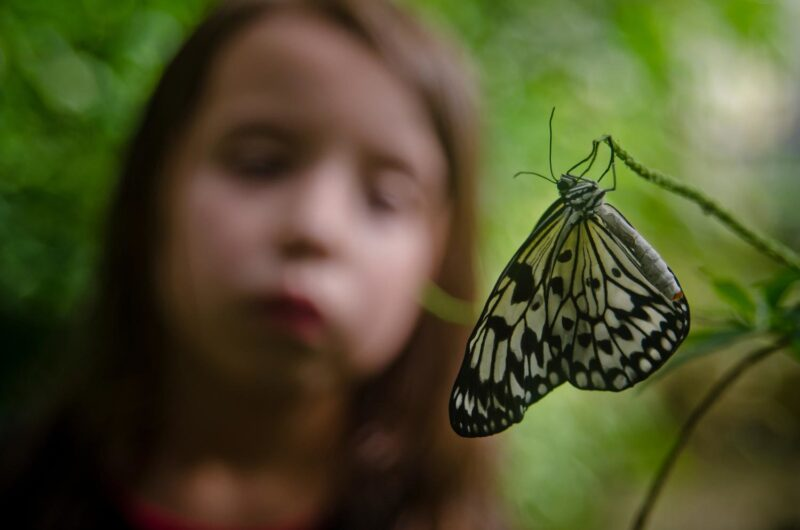 Butterfly And Insect World