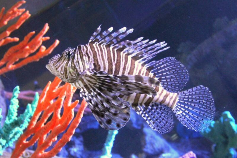 Deep Sea World Is A Popular Aquarium Located In The Village Of North Queensferry In Fife Scotland