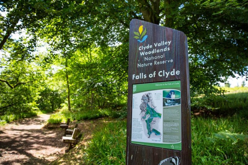 The Falls Of Clyde Walk