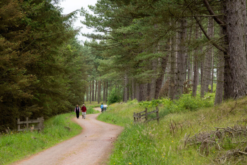 The National Cycle Network And The Fife Coastlal Trail Track As It Passes Through Tentsmuir Forest Near The Tentsmuir National Nature Reserve By St Andrews Fife